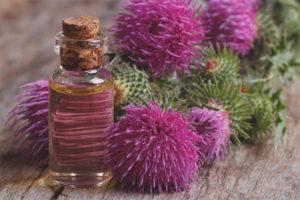Полезные свойства и противопоказания масла расторопши