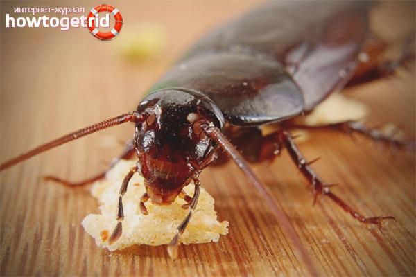 Избавление от тараканов народными способами