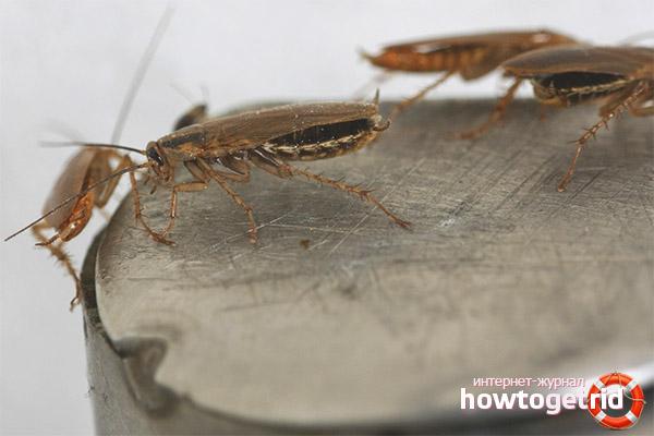 Как навсегда вывести тараканов из квартиры