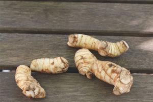 Лечебные свойства и противопоказания корня калгана