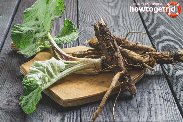 Лечебные свойства и противопоказания корня лопуха