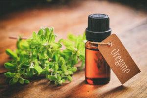 Полезные свойства и применение масла орегано