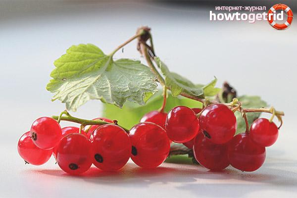 Полезные свойства и противопоказания красной смородины