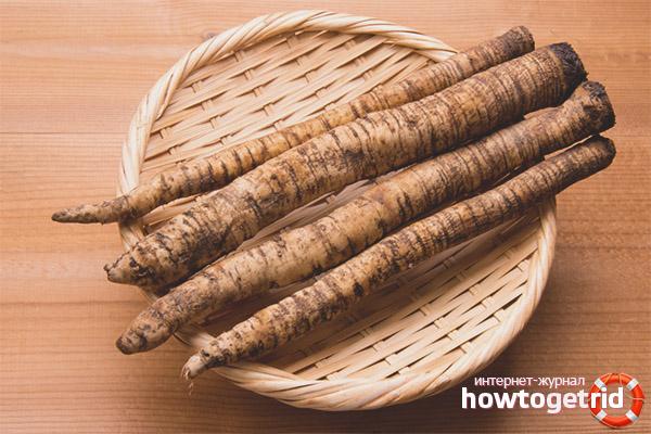 Полезные свойства корня лопуха