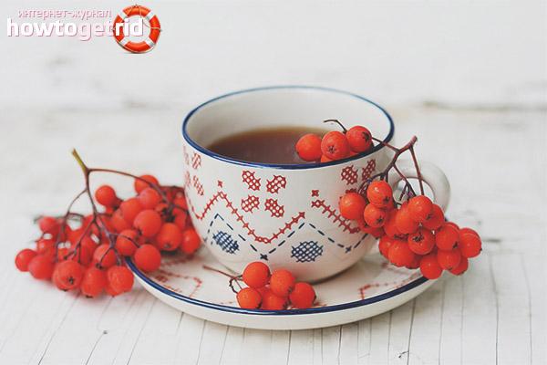 Применение рябинового чая