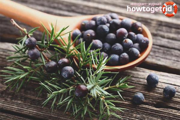 Терапия натуральными плодами можжевельника