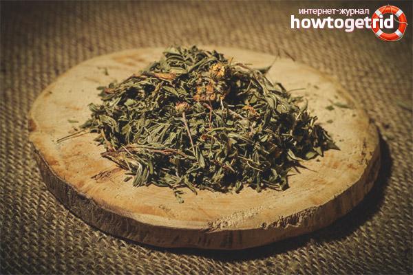 Заготовка курильского чая