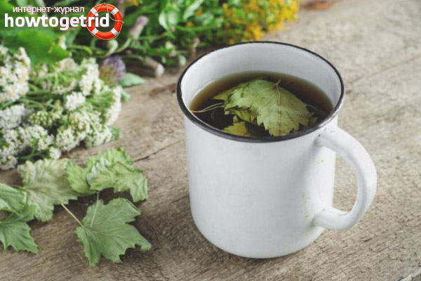 Целебный чай из листьев смородины