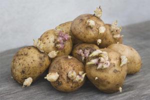Лечебные свойства и противопоказания ростков картофеля