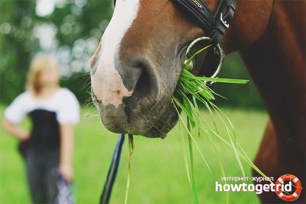 Питание английской чистокровной лошади