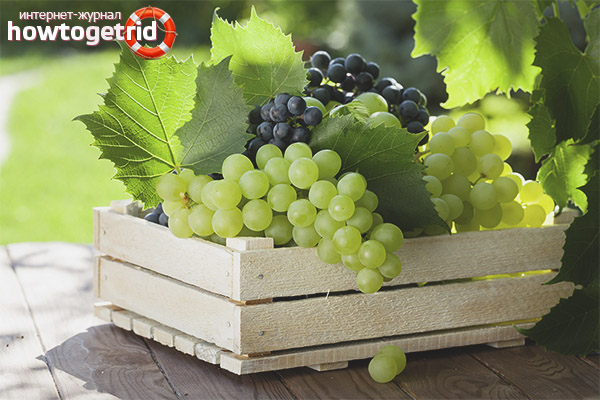 Полезные свойства и противопоказания винограда