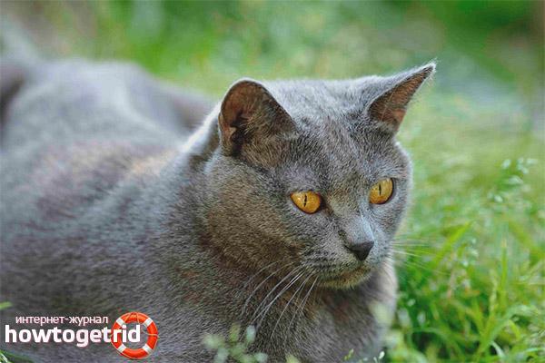 Характер картезианской кошки