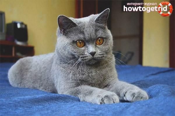 Картезианская кошка