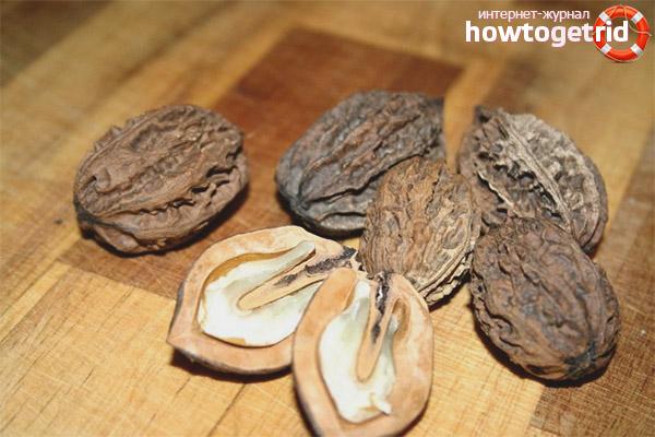 Лечебные свойства и применение маньчжурского ореха