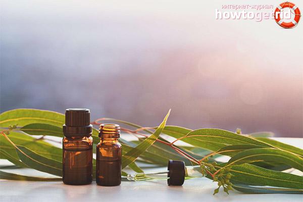 Масло эвкалипта в ароматерапии