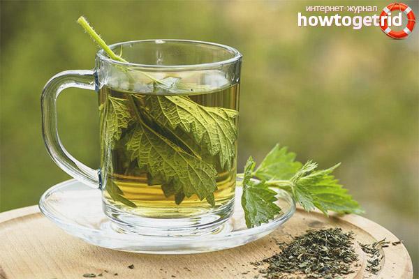 Польза и вред чая из крапивы