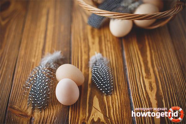 Польза и вред яиц цесарки