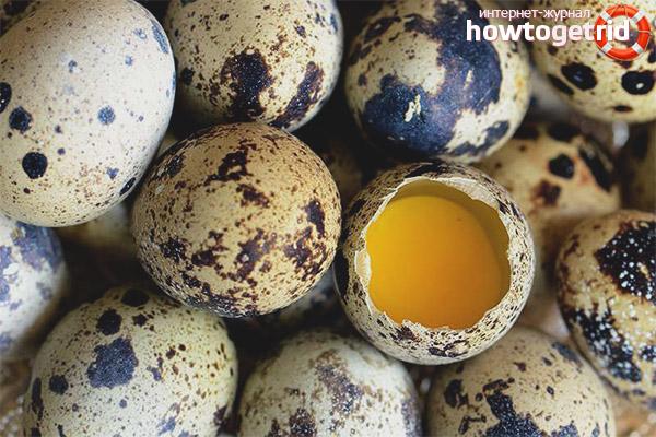 Польза и вред скорлупы перепелиных яиц