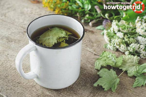Вред чая из смородиновых листьев