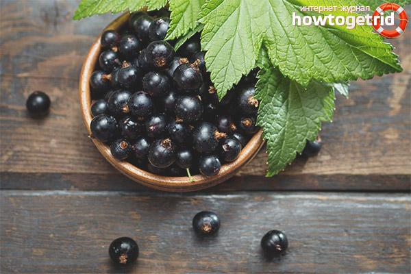 Вред черной смородины при грудном вскармливании