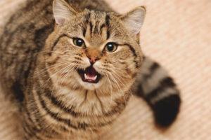 Кошка стала агрессивной
