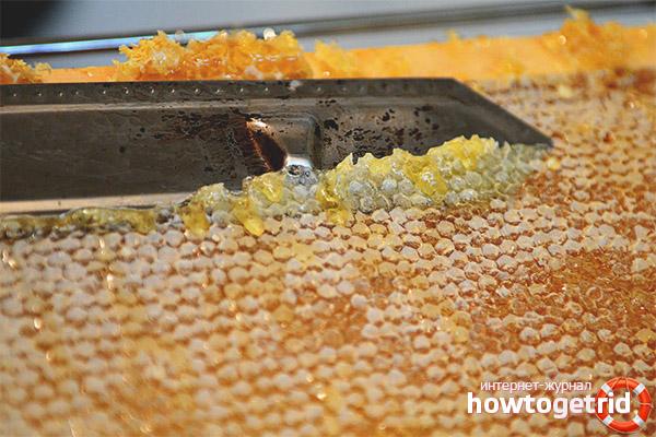 Лечебные свойства медовой печатки