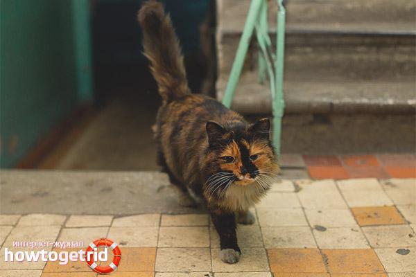 Как отучить кошек гадить в подъезде