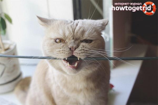 Как отучить кошку или кота грызть провода