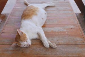 Как понять, что кошка скоро родит