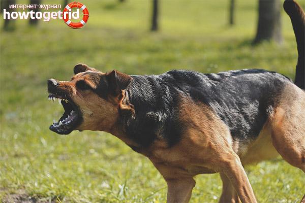 Как сделать собаку злой на чужих