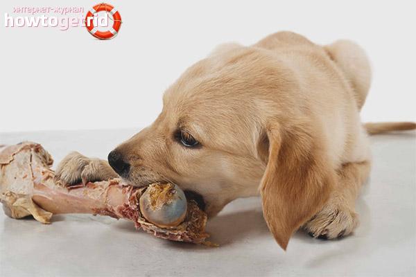 Какие неприятности могут возникнуть у собаки после кормления костями