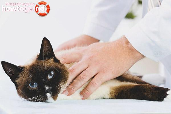 Лечение обезвоживания у кошек