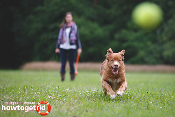 Места для прогулки с собакой
