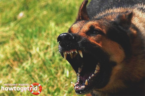 Основные способы обучения собаки на злобу