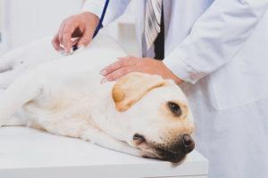 Отравление крысиным ядом у собак