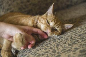 Почему кошка кусается когда ее гладишь