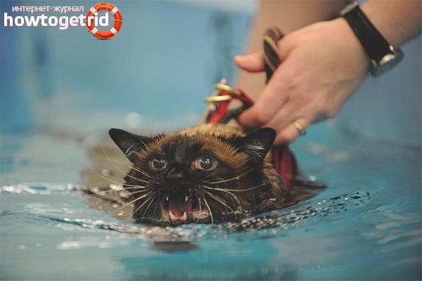 Почему кошки и коты боятся воды