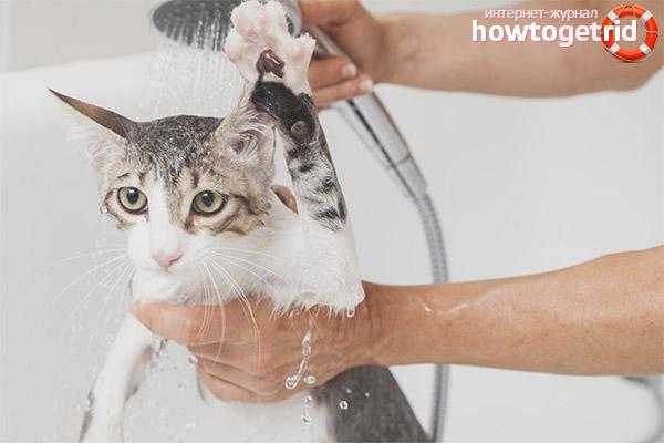 Правила купания кошки после родов