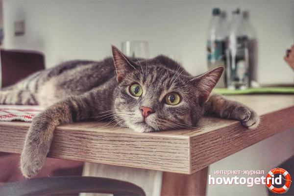 Сколько кошка может прожить без воды и еды
