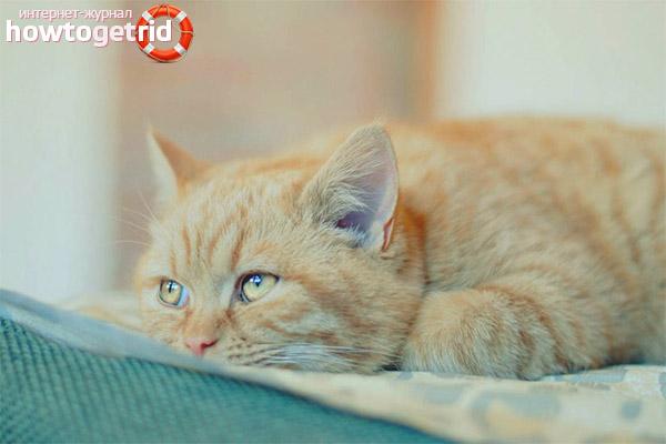 Что делать при отравлении кошки крысиным ядом