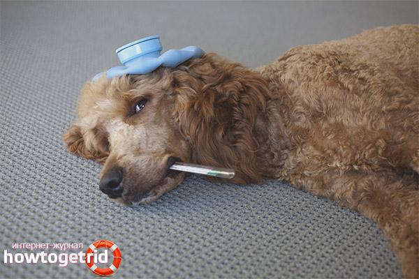 Как помочь собаке при отравлении