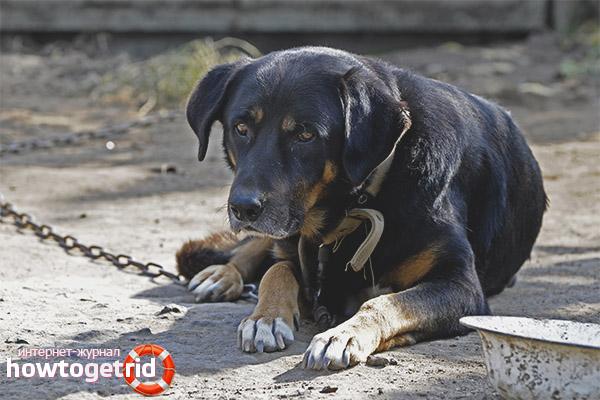 Как приучить собаку к вольеру