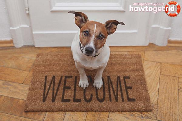 Какую породу собаки выбрать для квартиры