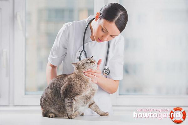 Лечение помутнения глаза у кошки