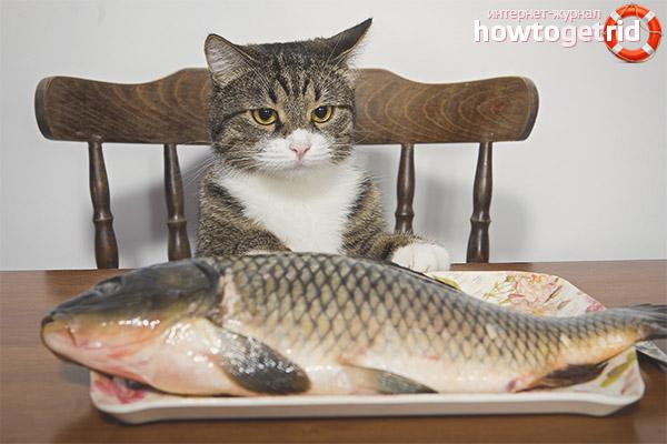 Можно ли кормить кастрированного кота рыбой