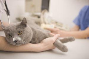 Отравление кошки крысиным ядом