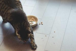 Почему кошка или кот закапывает еду