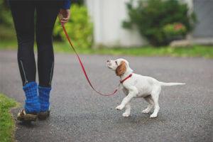 С какого возраста можно гулять с щенком
