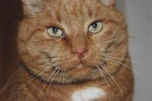 Коричневые выделения у кошки из глаз