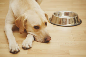 Аллергия на корм у собак